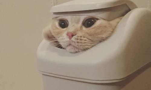Koty z Gry ô Trōn