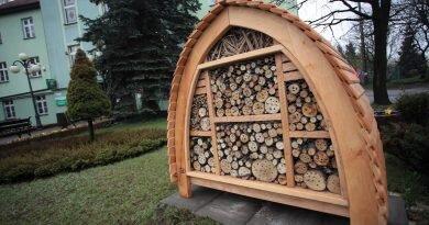 W Radlinie powstaną…korytarze ekologiczne dla pszczół!