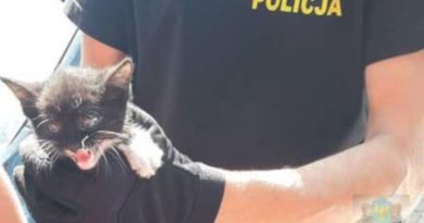 Prudnik: Uretowany kocik