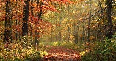Anna Katroshi: Bytomska jesień