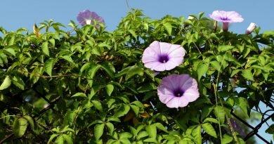 Bartodziej & Soika: Kochanie majowe